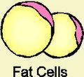 Fatcells